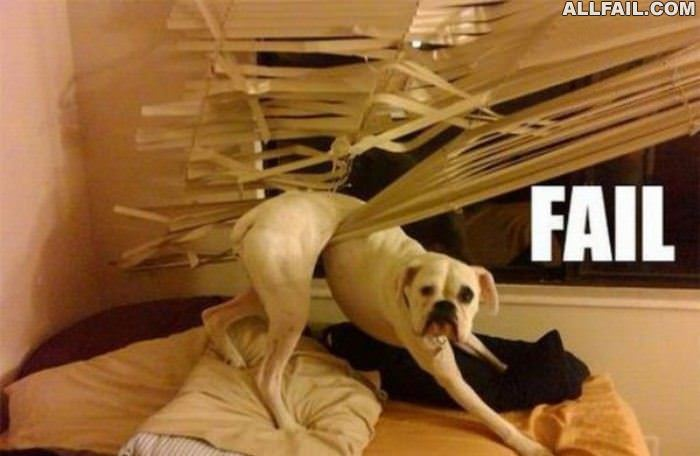 failure dog